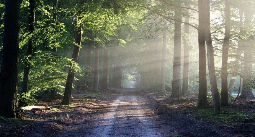 Konec prokrastinace. Vysázejte si svůj vlastní les