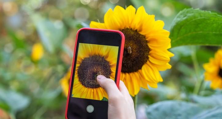 Guru tipy: 10 rad, jak skvěle fotit mobilem